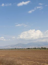 Herons and Egrets at Agamon HaHula in the Upper Galilee