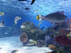 Israel Aquarium again!