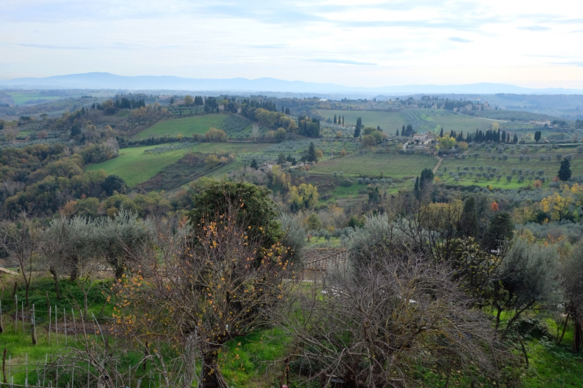Green hills with orchards and vineyards in Tuscany, Italy