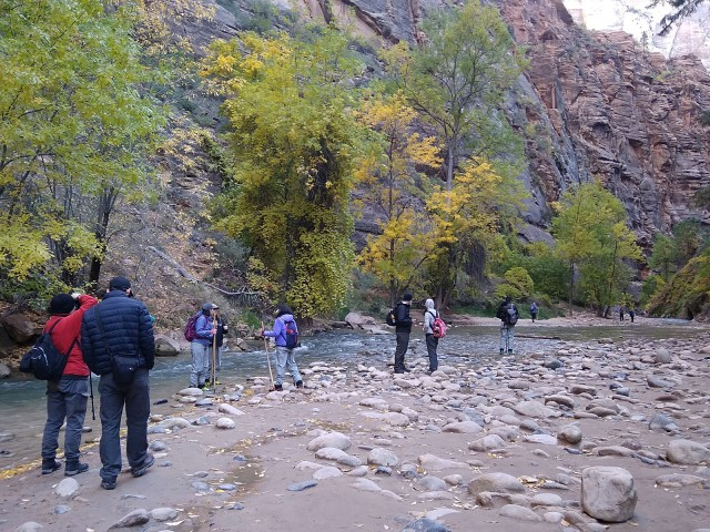 people walking in stream and canyon in zion national park